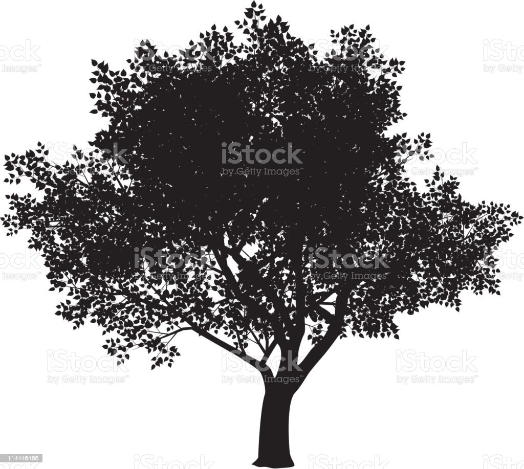The silhouette of a big tree with a white background vector art illustration