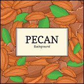 The square frame on pecan background. Vector card illustration. Nuts
