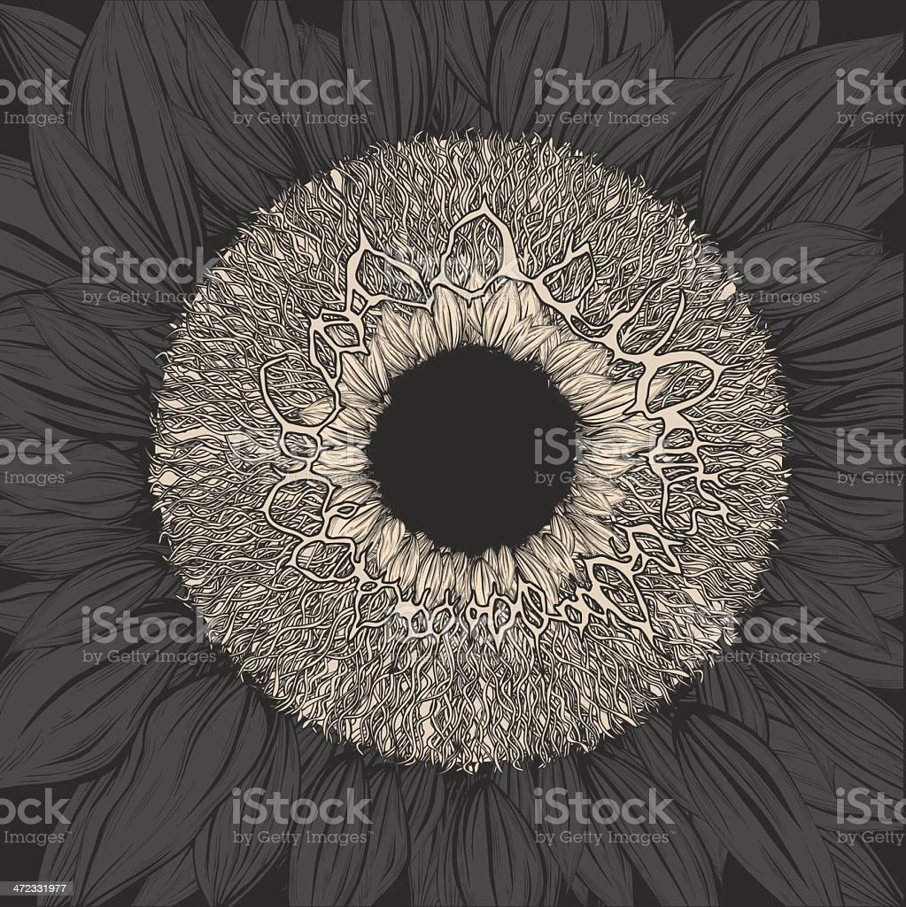 The story of human eye. royalty-free stock vector art