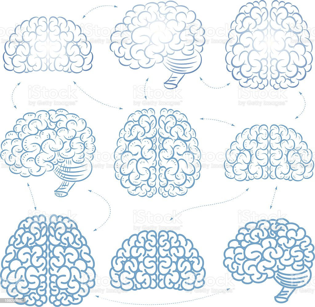 The vector brains royalty-free stock vector art