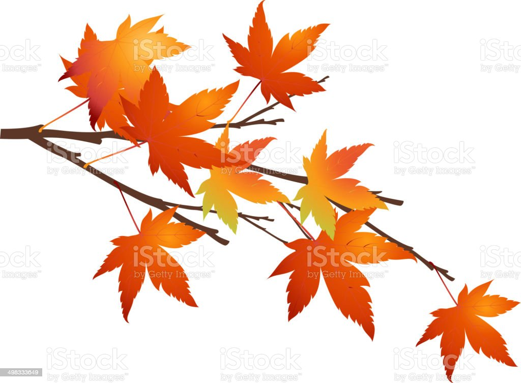 The view of maple leaf vector art illustration