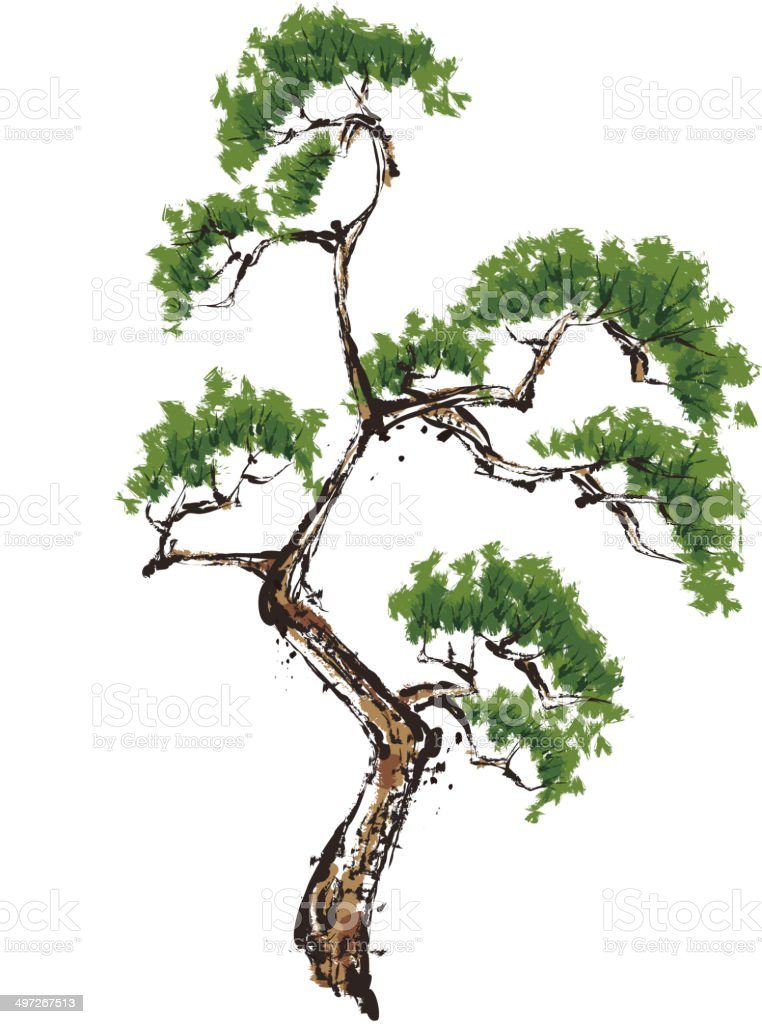 The view of pine vector art illustration