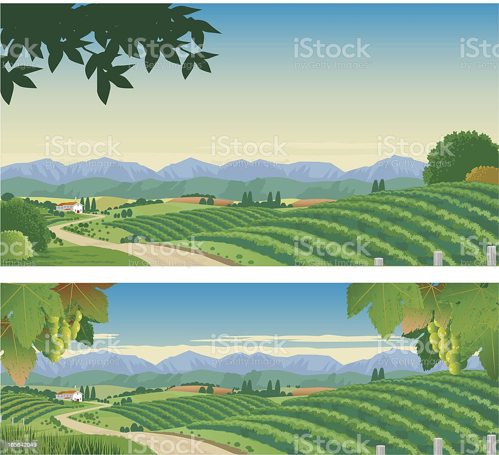 The Vineyard vector art illustration