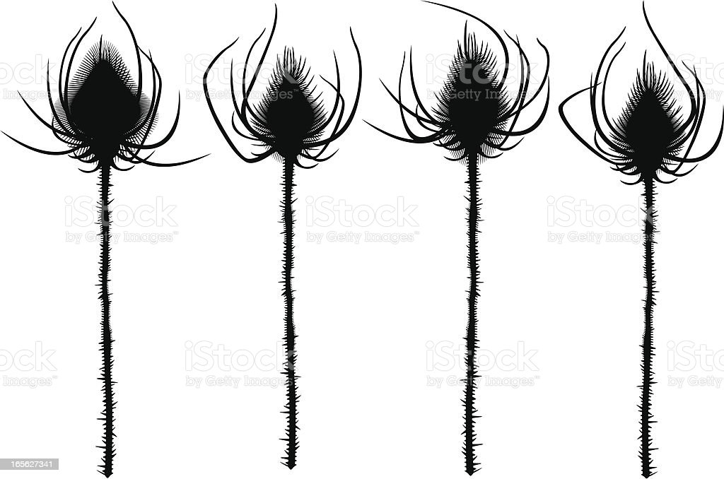 Thistles Silhouettes royalty-free stock vector art
