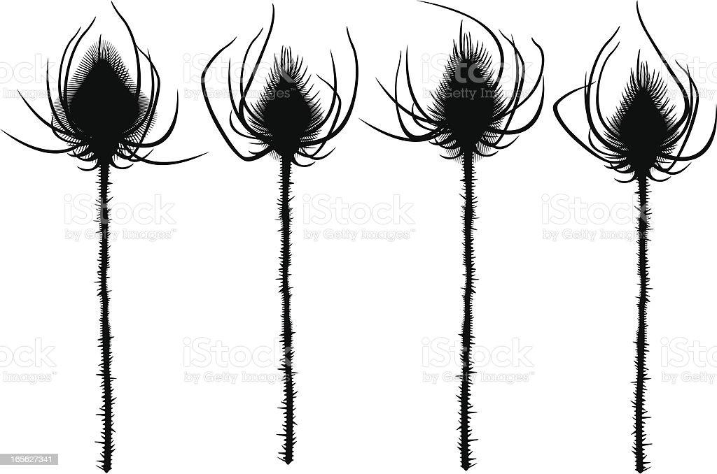 Thistles Silhouettes vector art illustration