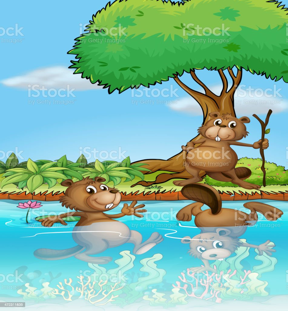 Three beavers playing at the river royalty-free stock vector art