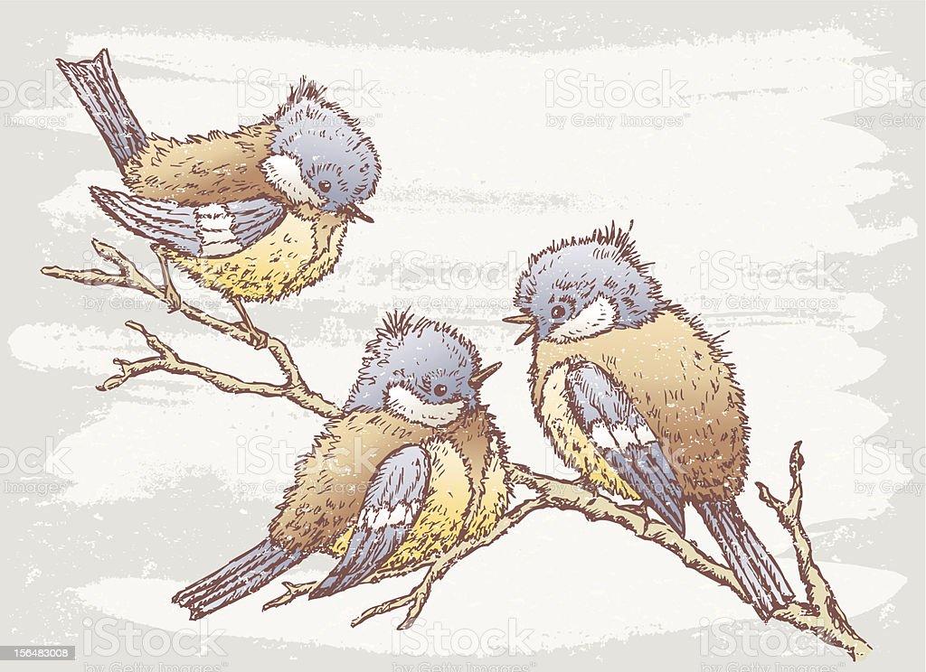 three birds vector art illustration