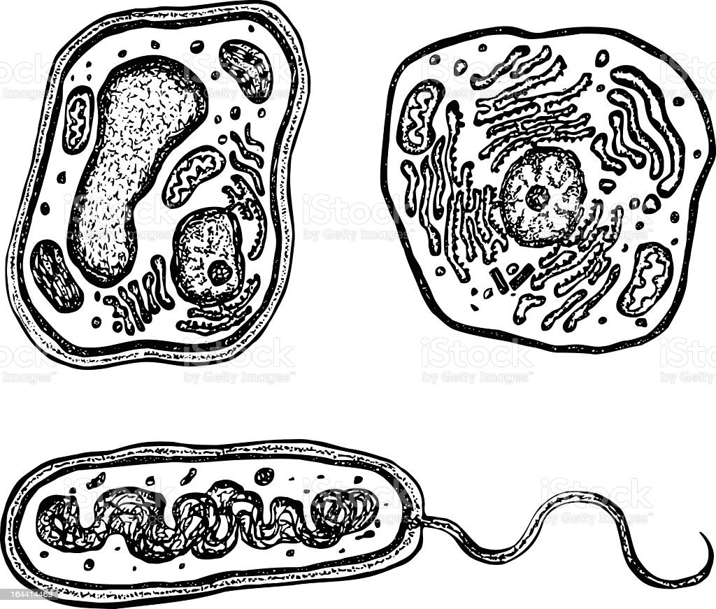 Three black and white drawings on cells vector art illustration