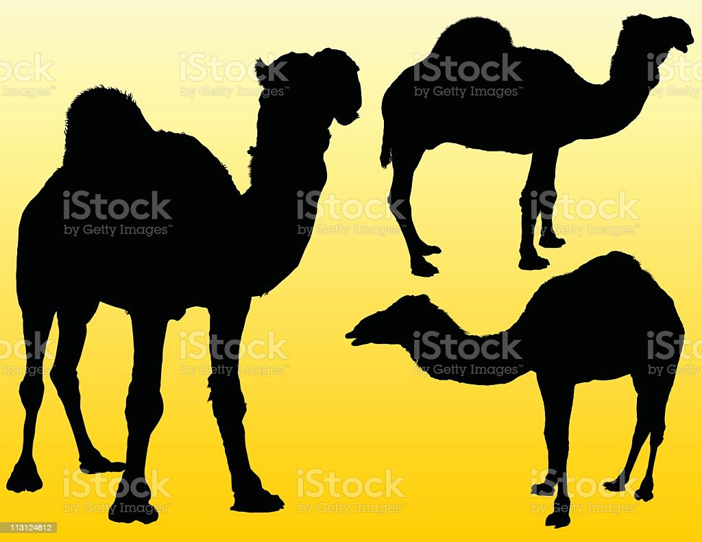 Three Camels (Vector) royalty-free stock vector art