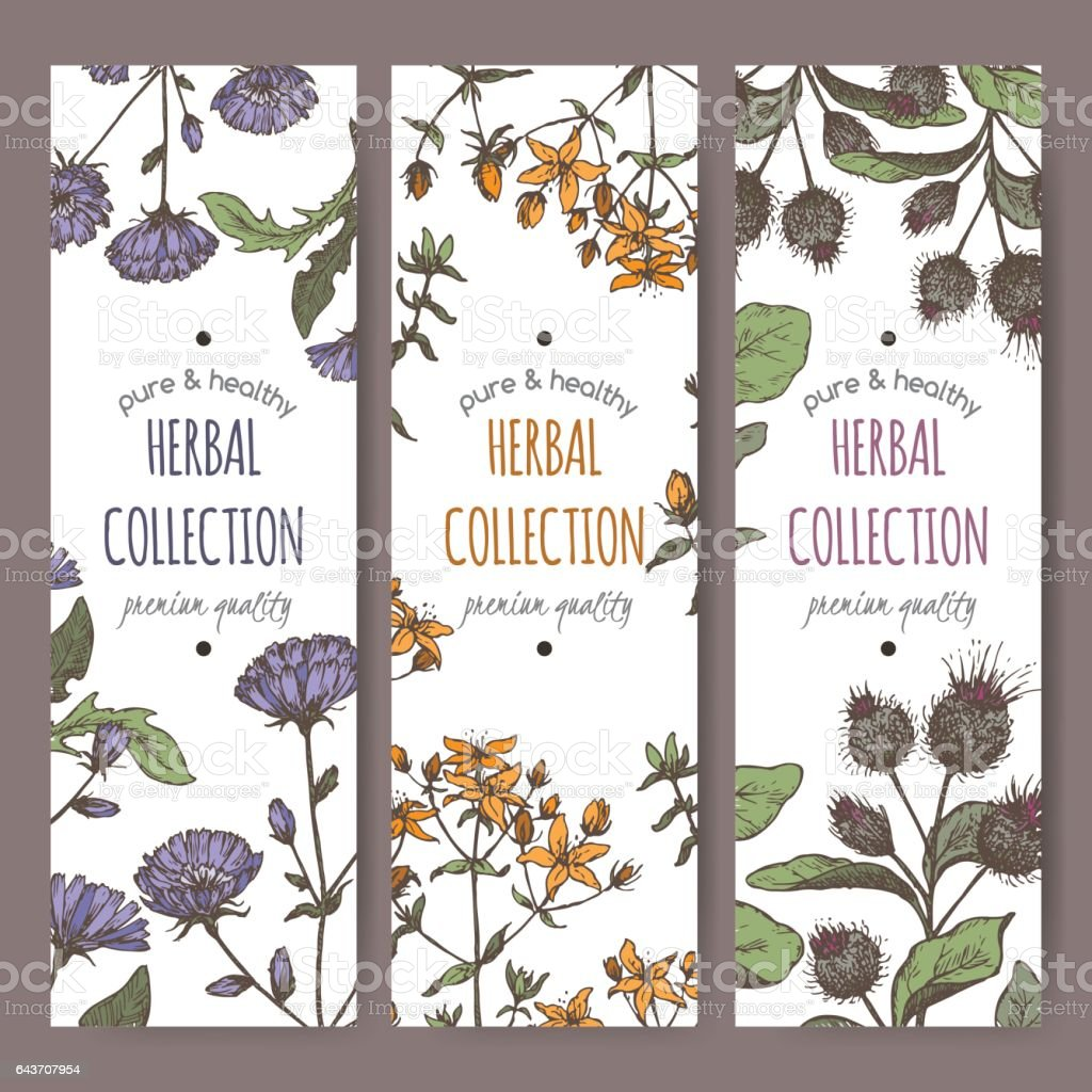 Three color vector labels with burdock, chicory, saint john wort vector art illustration