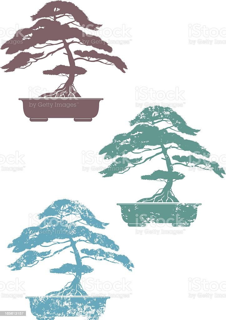 Three colored bonsai on white background vector art illustration