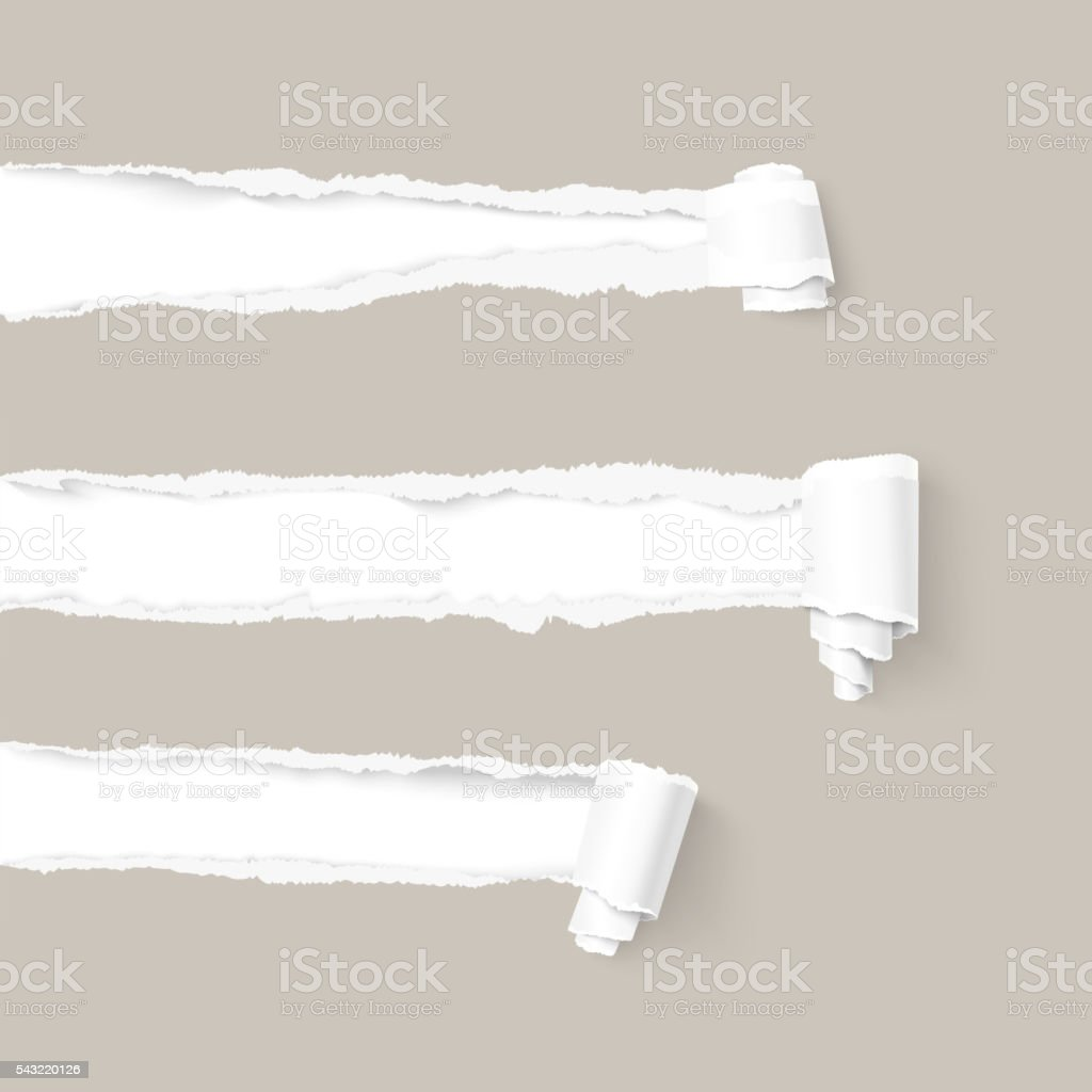 Three craft gray torn paper with scroll vector art illustration