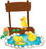 Three ducklings swimming in the pond