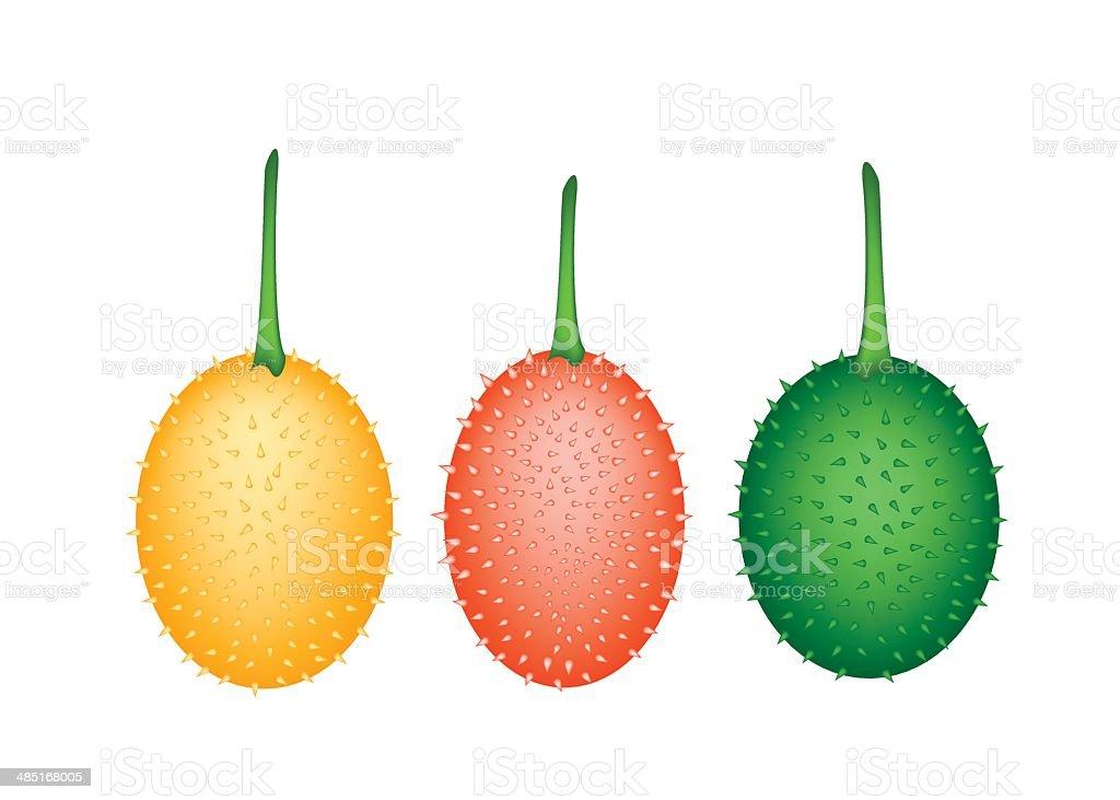 Three Fresh Teasel Gourds on White Background vector art illustration