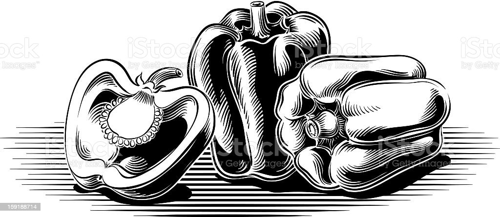 Three image of peppers in vintage drawing vector art illustration