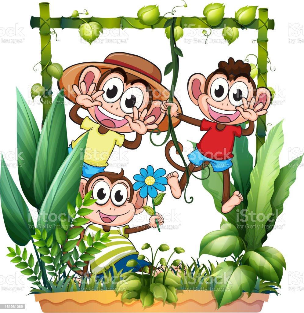 Three monkeys playing royalty-free stock vector art