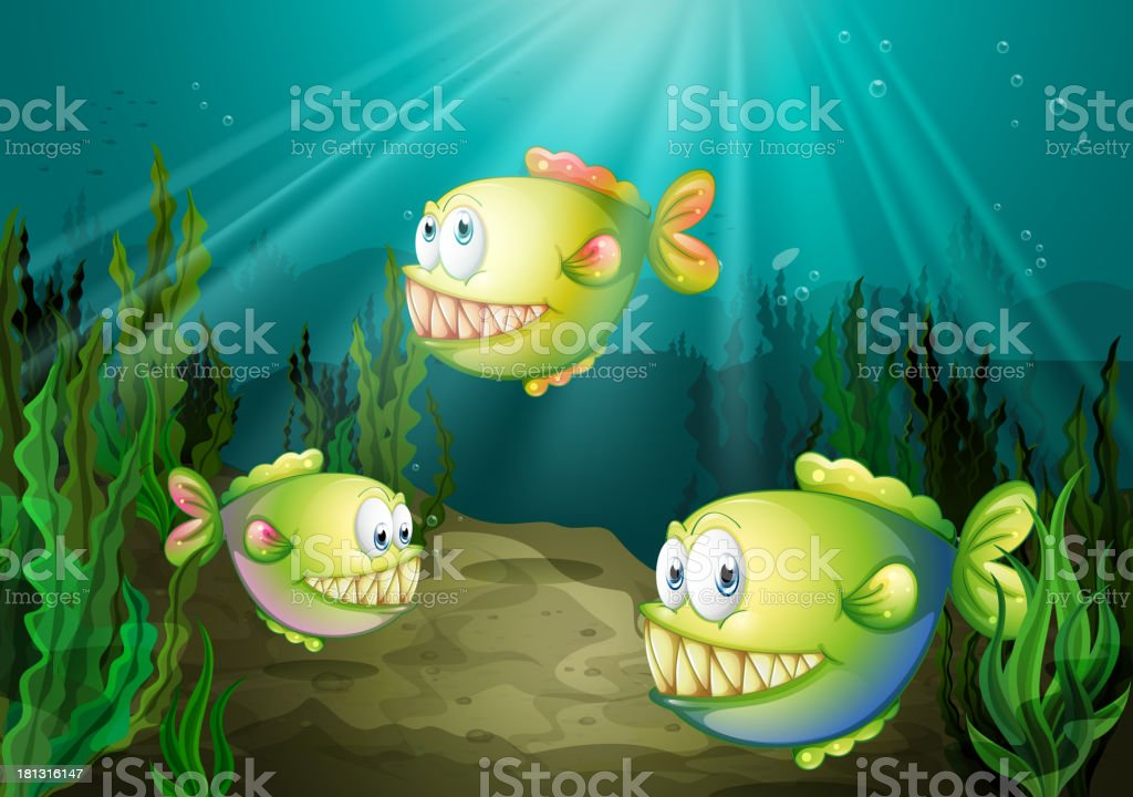Three piranhas under the sea with seaweeds royalty-free stock vector art