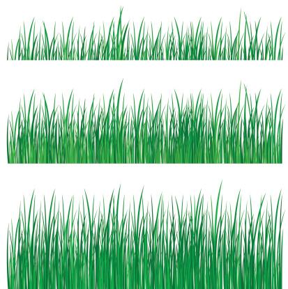 blade of grass vector - photo #37