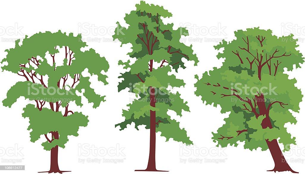 Three trees vector art illustration