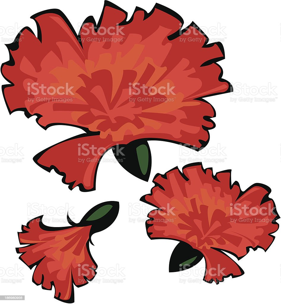 three vector red carnations isolated on white background royalty-free stock vector art