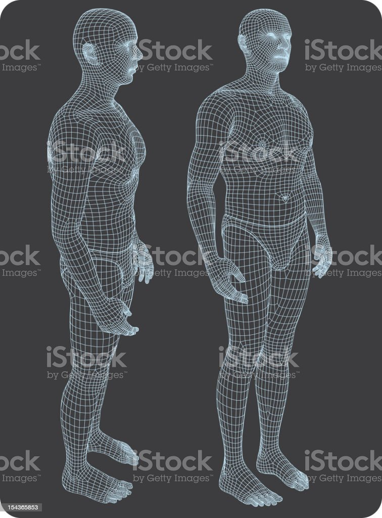 Three-dimensional human body vector art illustration