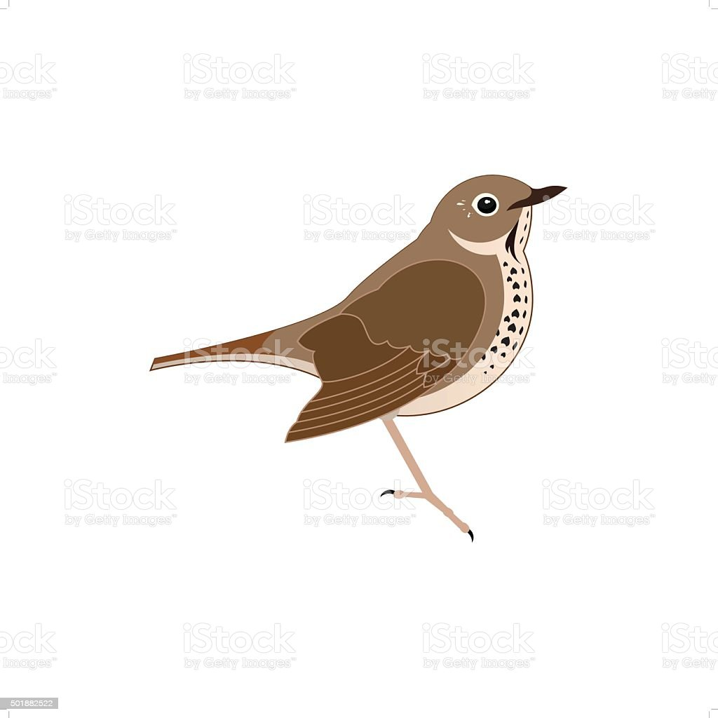 Thrush vector art illustration