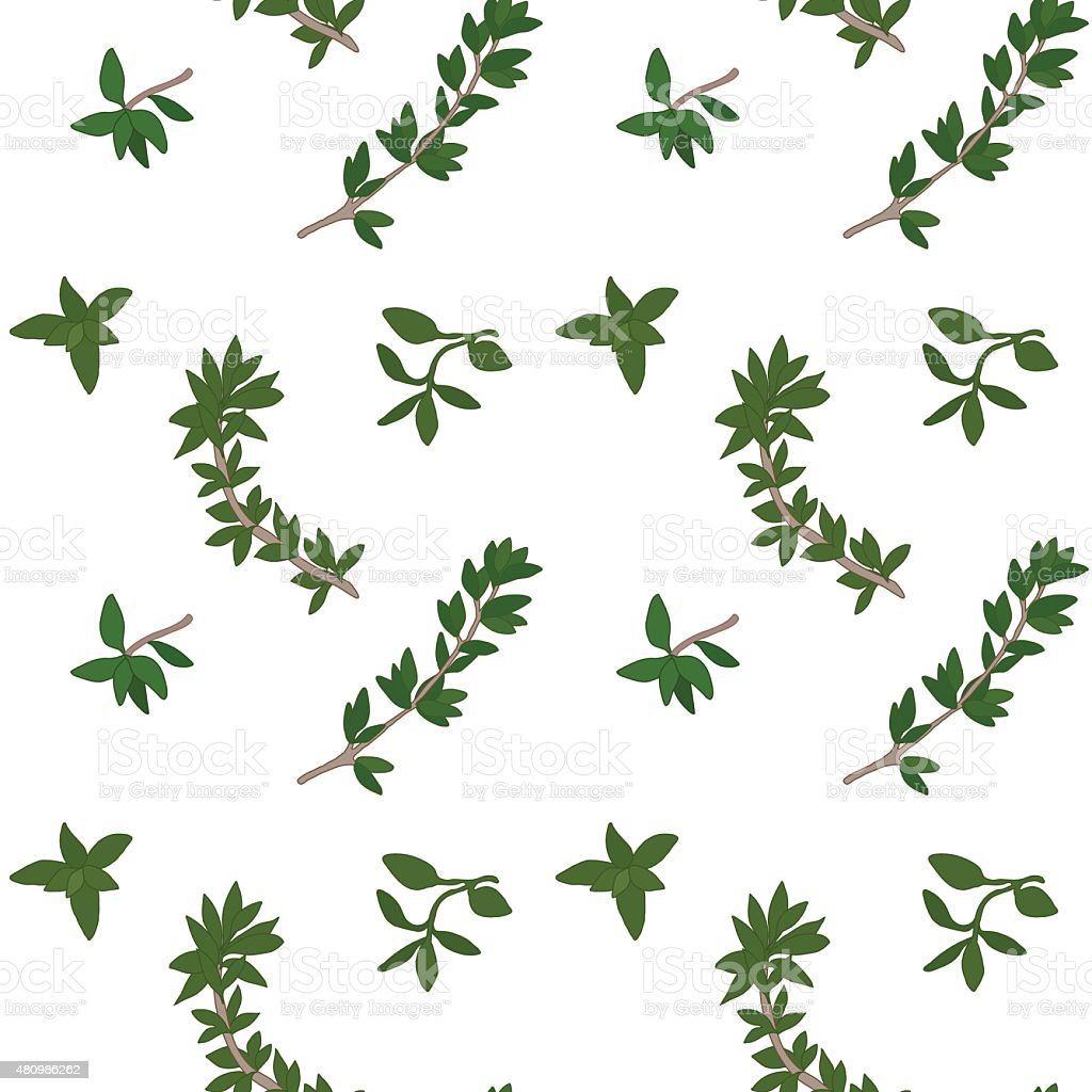 Thyme pattern vector art illustration