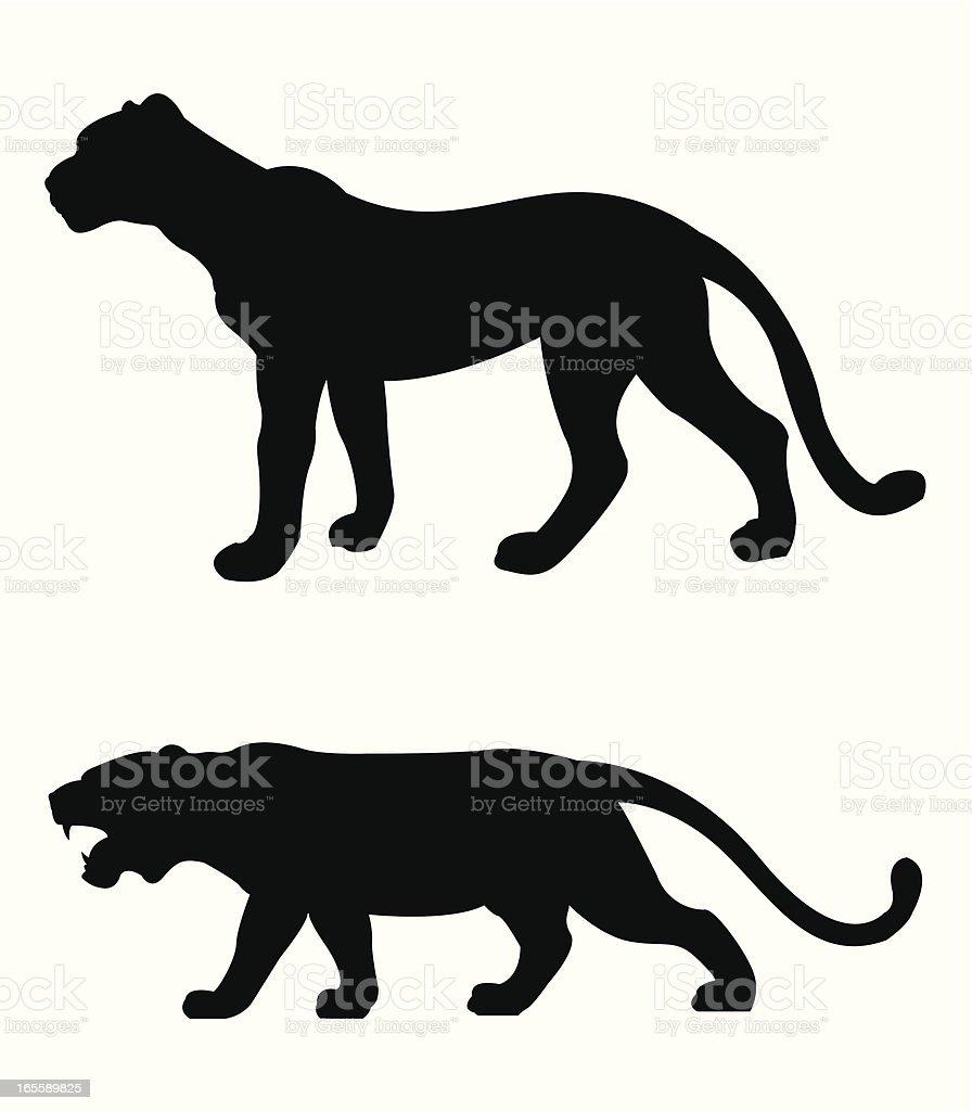 tiger and cheetah royalty-free stock vector art