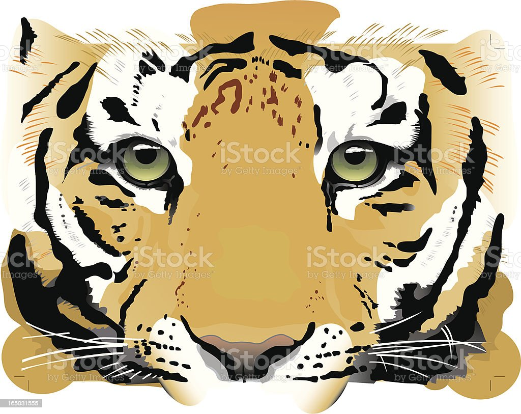 Tiger Eyes - Vector royalty-free stock vector art