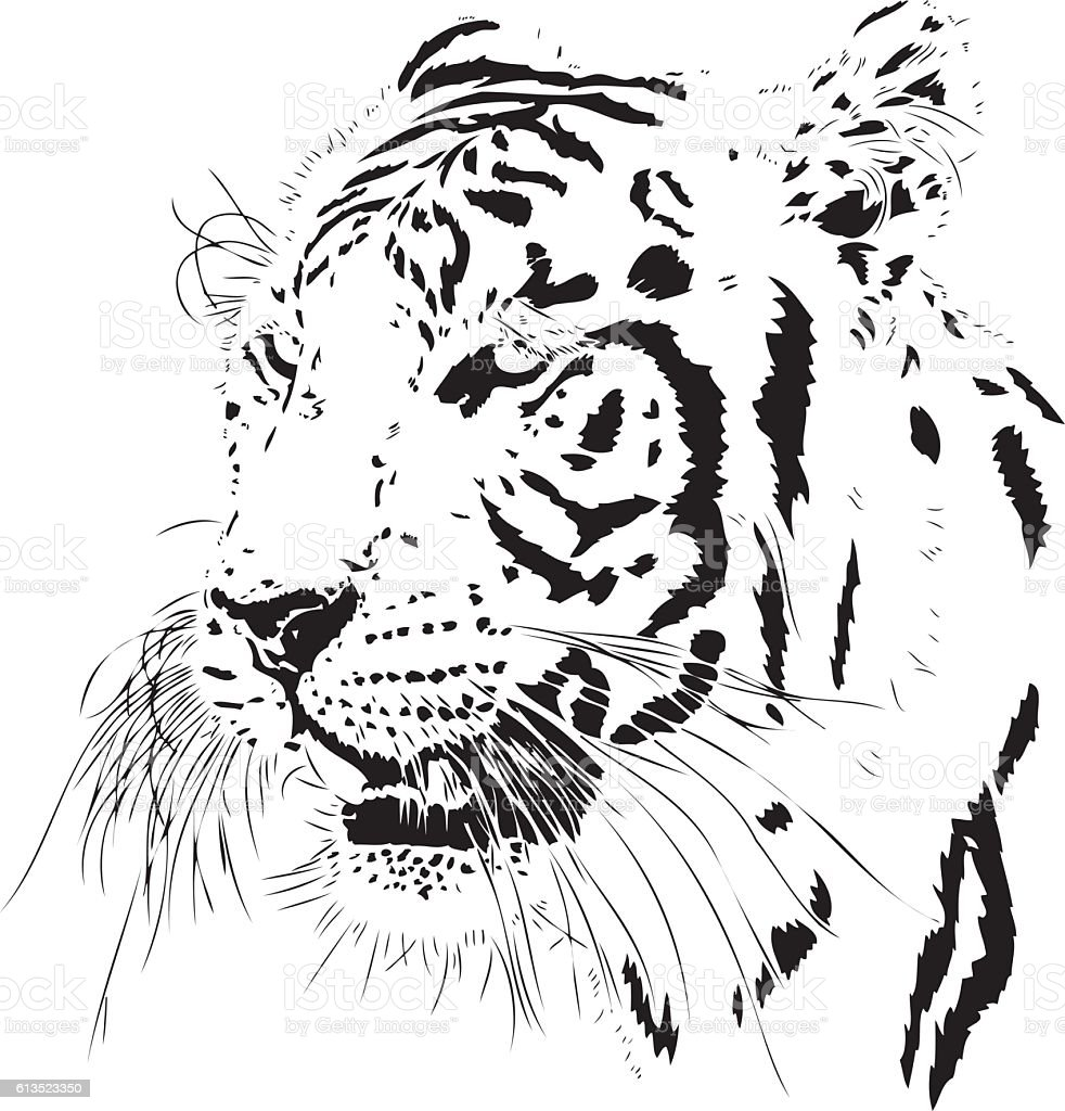 Tiger illustration lateral view vector art illustration