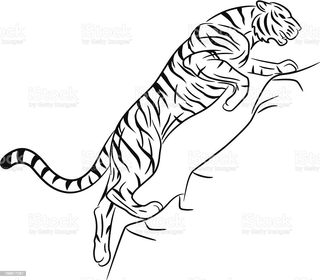 tiger jumping and running up stock vector art 156817267 istock