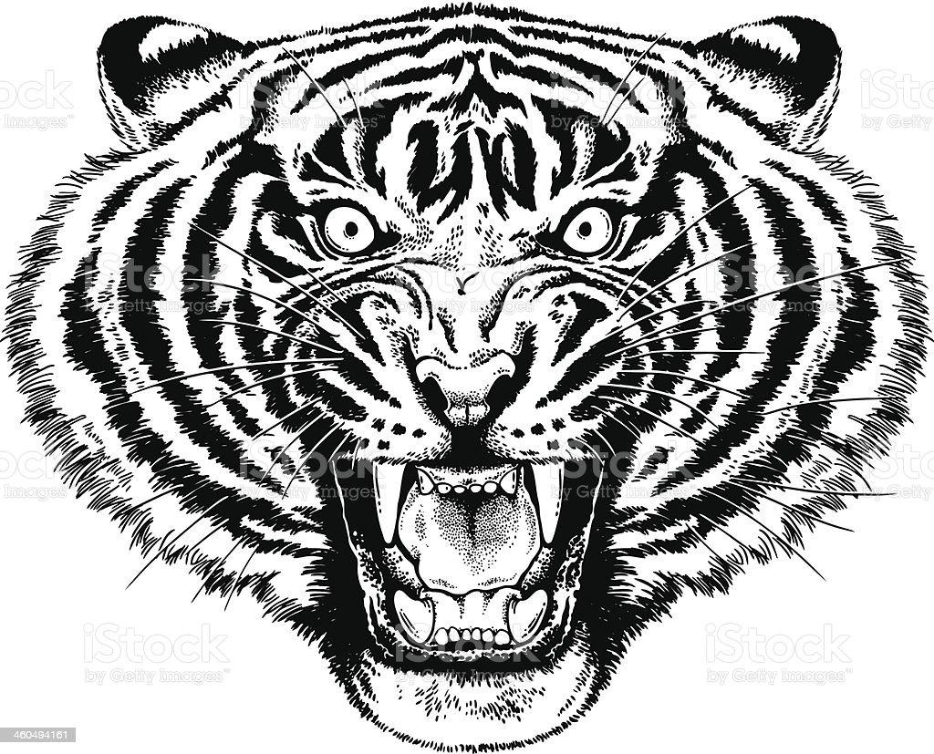 Tiger Roar royalty-free stock vector art