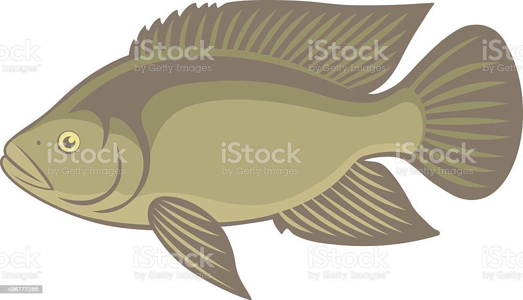 tilapia fish vector art illustration