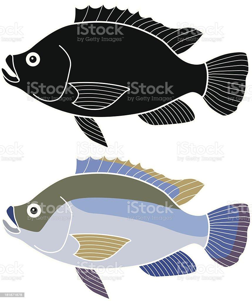 tilapia vector art illustration
