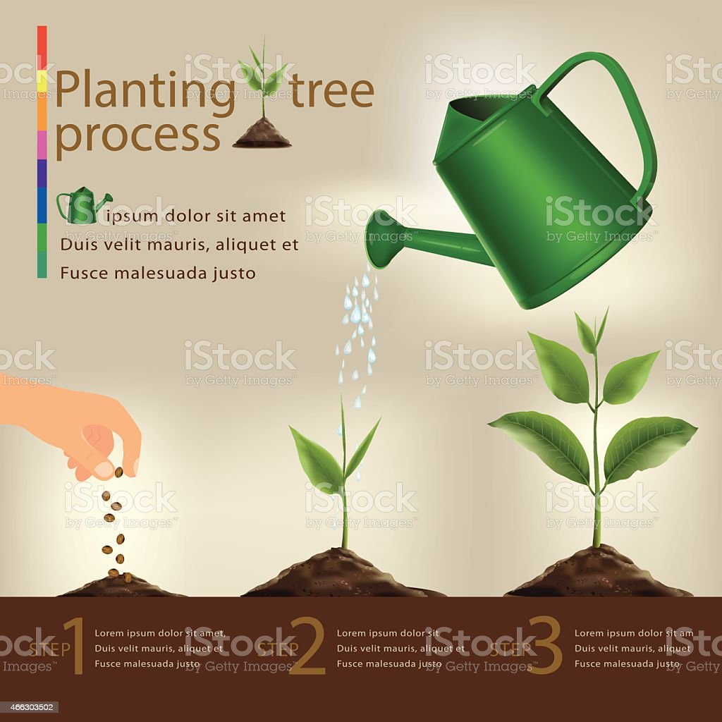 Timeline infographic of planting tree process.vector vector art illustration