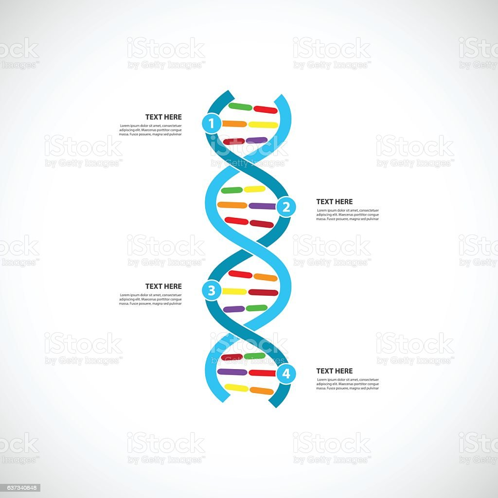 DNA timeline vector art illustration