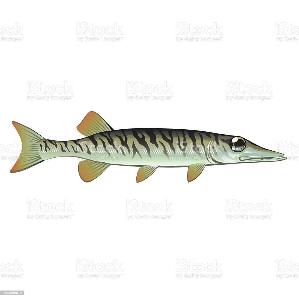 Tiny baby muskie Vector Art Fish Farm vector art illustration