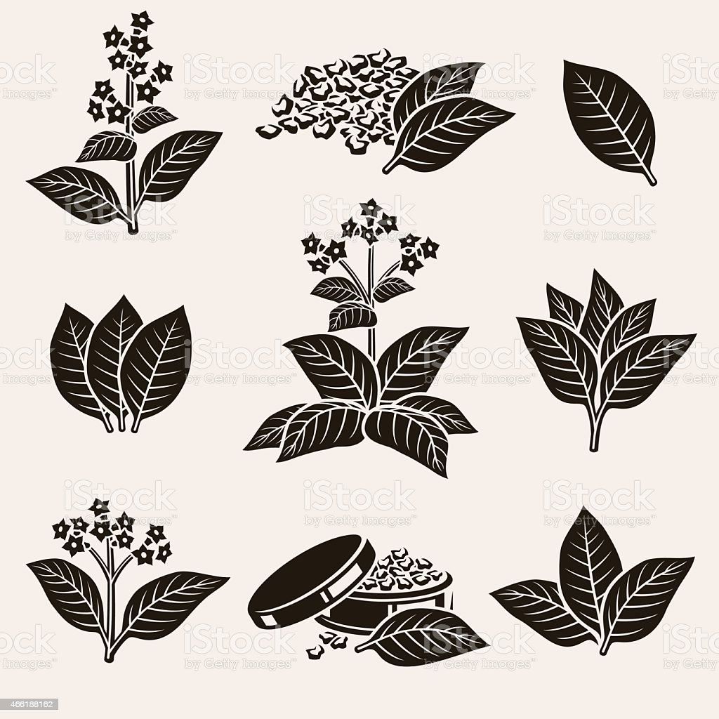 Tobacco leaf set. Vector vector art illustration