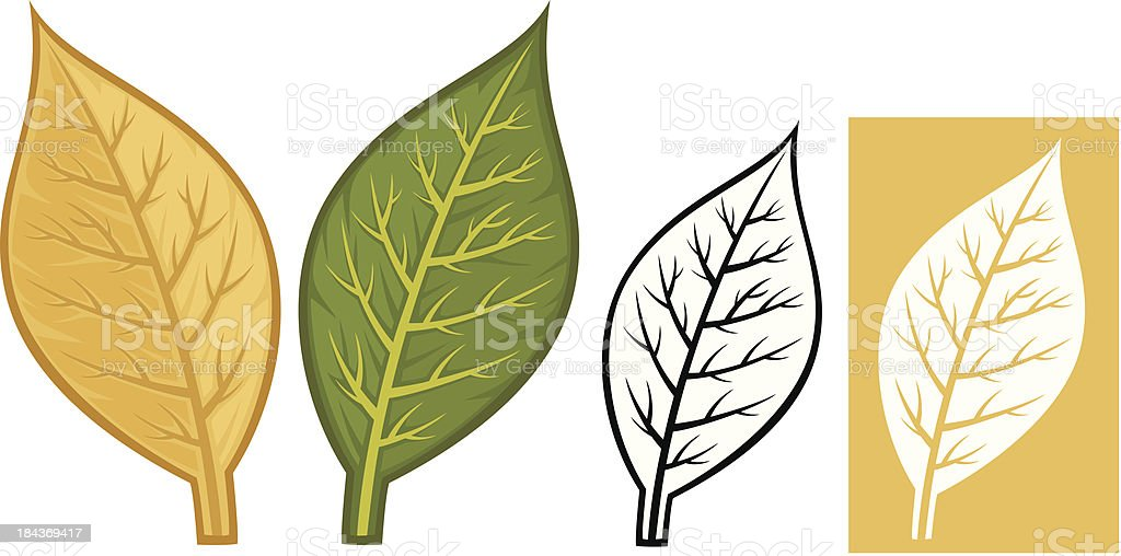 tobacco leaves vector art illustration