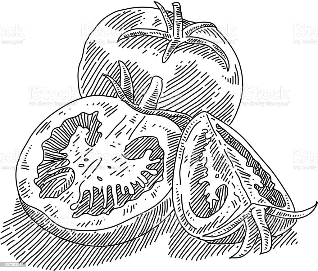 Tomato and slices Drawing vector art illustration