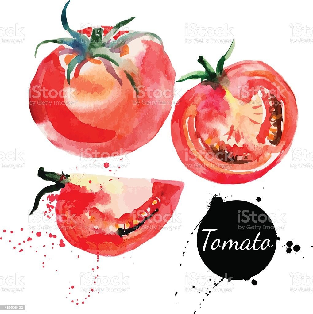 Tomato set. Hand drawn watercolor painting on white background. vector art illustration