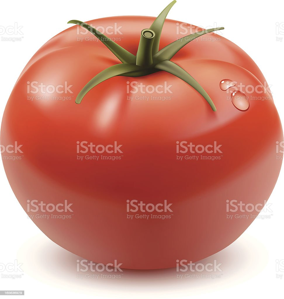 Tomato vector art illustration