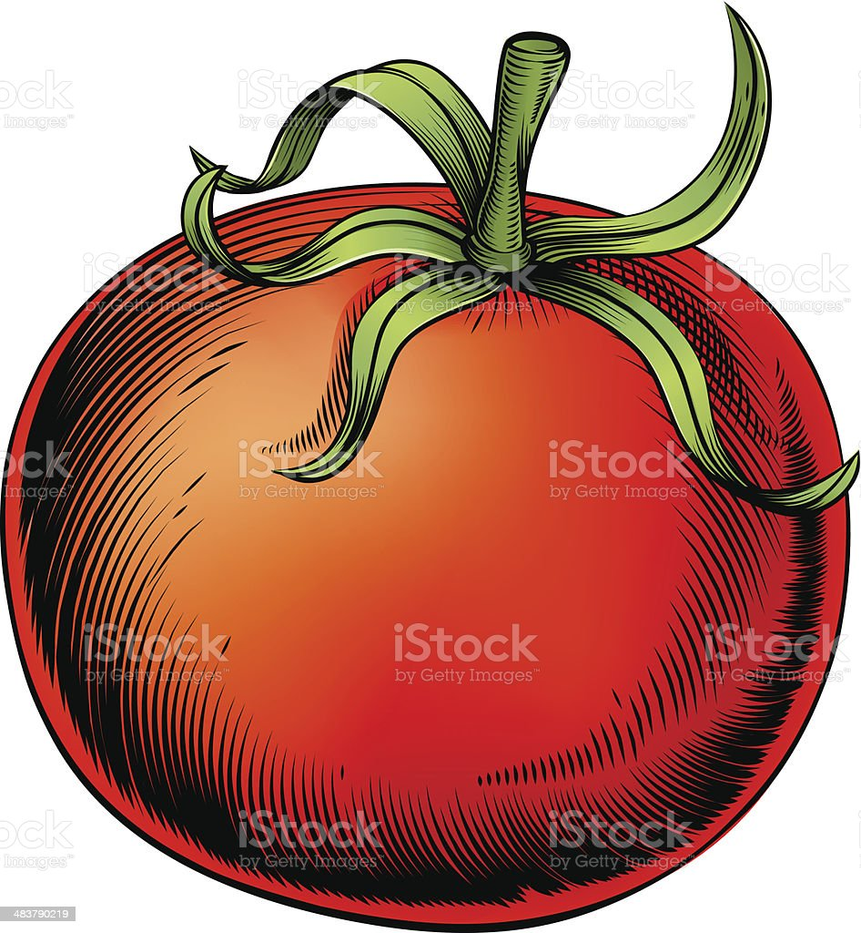 Tomato vintage woodcut illustration vector art illustration