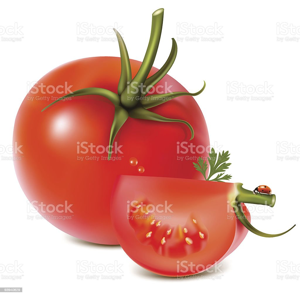 Tomato with water drops, parsley and ladybug. royalty-free stock vector art