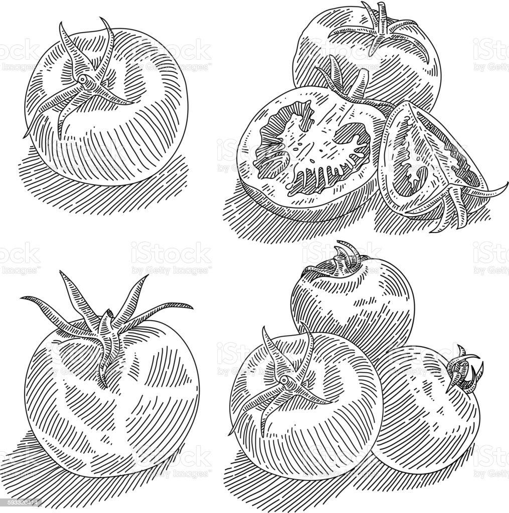 Tomatoes Drawing vector art illustration