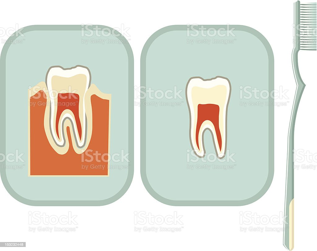 Tooth and toothbrush royalty-free stock vector art