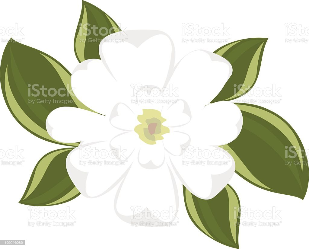 Top view of southern magnolia vector art illustration