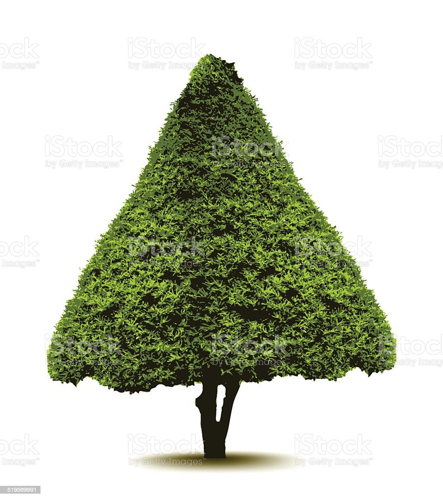 Topiary Landscape plant in the form of a Christmas tree. vector art illustration