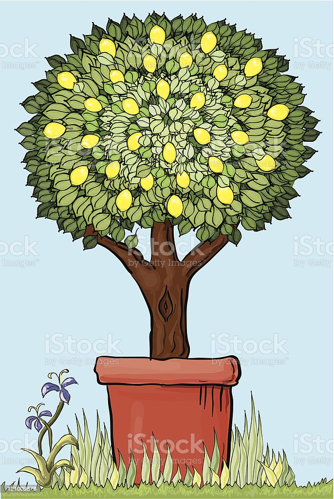 Topiary lemon tree vector art illustration