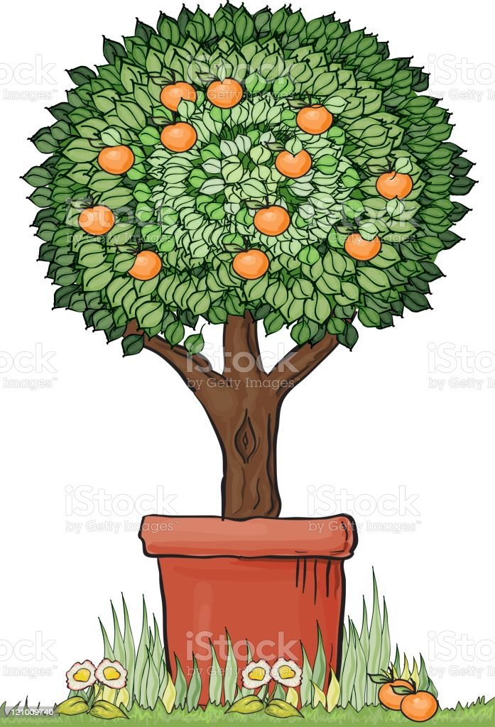Topiary orange tree vector art illustration